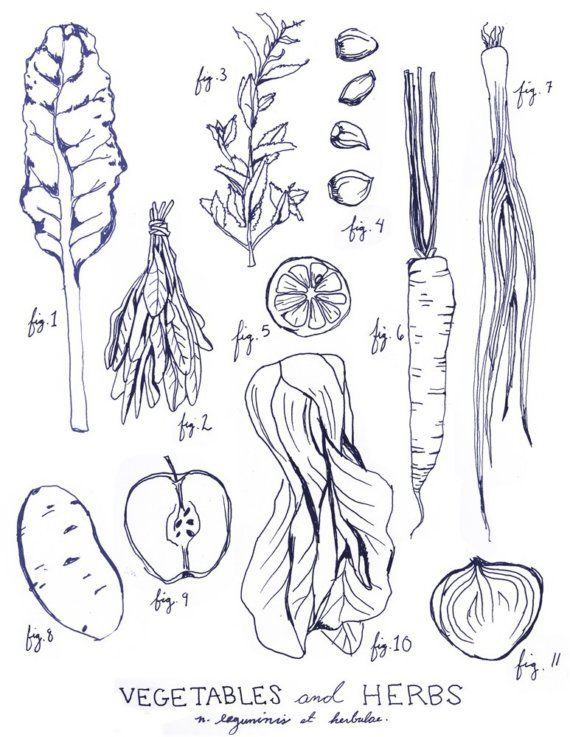 Drawn vegetables fruit and vegetable Legumes art & Illustration Botanical