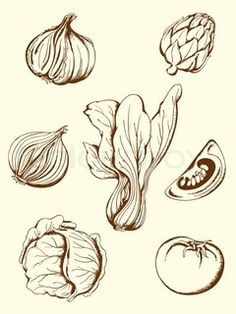 Drawn vegetables fruit and vegetable Vector Design vintage of Vector