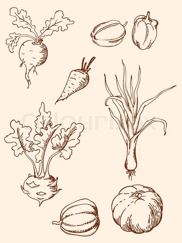 Drawn vegetables vintage Of vegetables icons vegetables