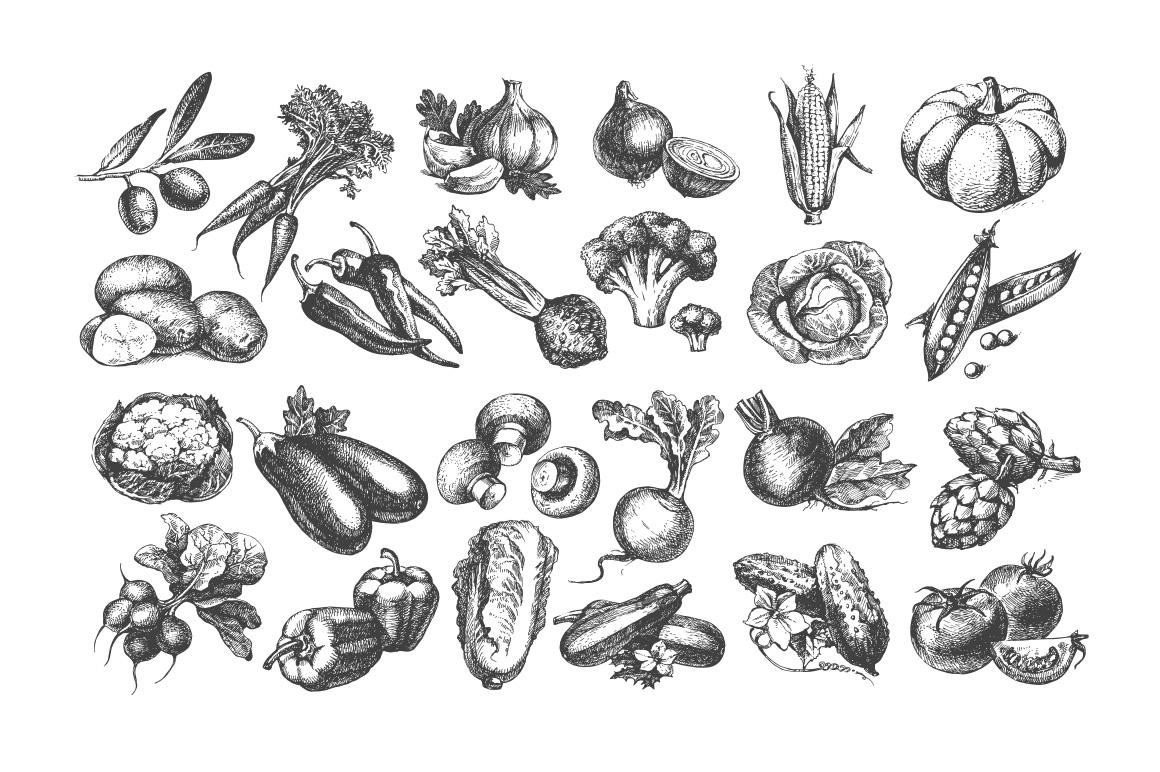 Drawn vegetables vintage Discount! Bundle sketches vegetables Creativo