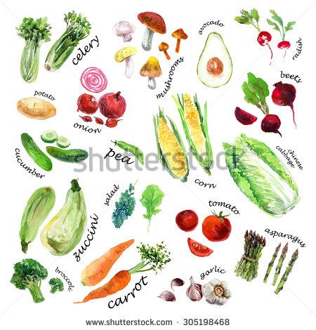 Drawn vegetables watercolor Good watercolor on watercolor vegetables