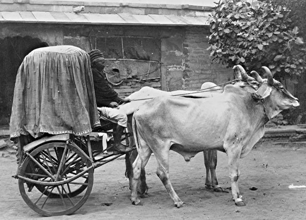 Drawn vehicle Of [Example animal vehicle] Example