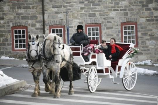Drawn vehicle beginner Rides  Horse Carriage Drawn