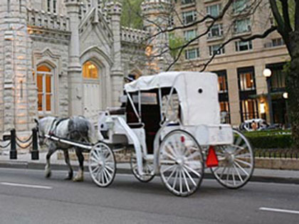 Drawn vehicle face Drawn Owners Ban Carriage Horse