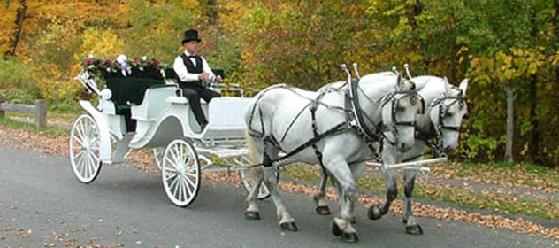 Drawn vehicle horse Drawn Carriages com Horse Horse