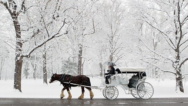 Drawn snowfall winter The The carriage ride Horse
