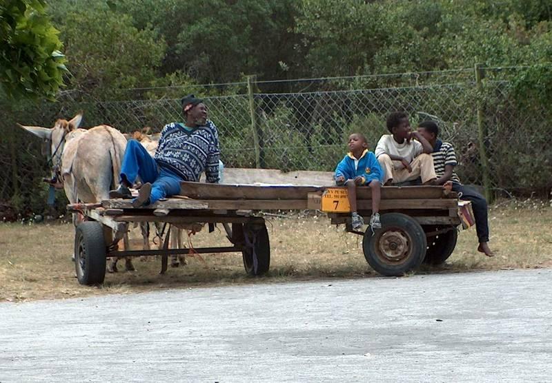 Drawn vehicle vehicle Cart PE Donkey in DC