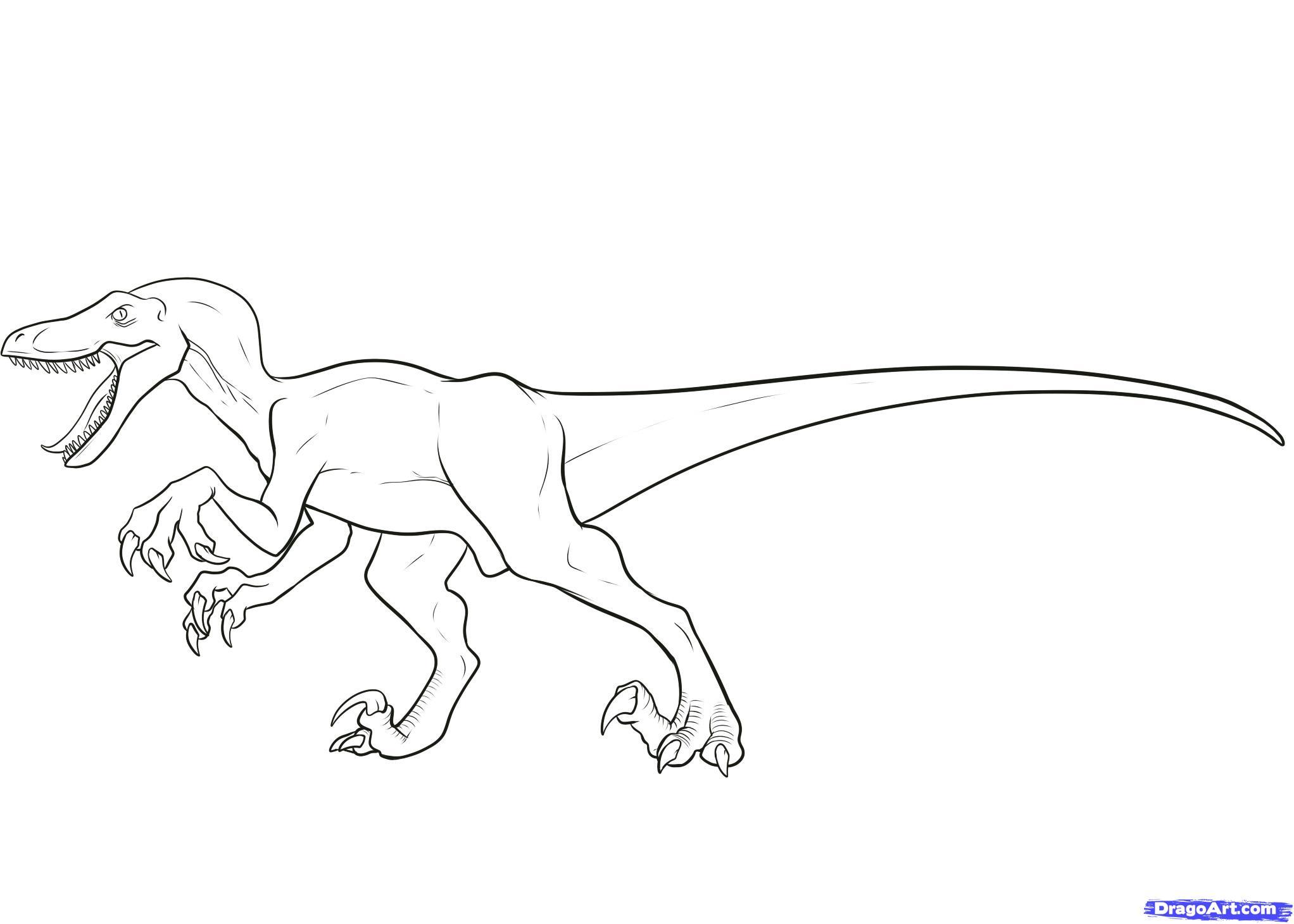 Drawn velociraptor 8 to velociraptor velociraptor a