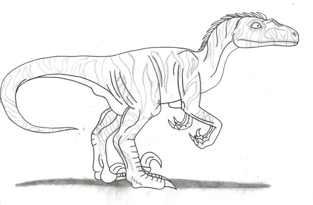 Drawn velociraptor LordessofDragons Colouring Velociraptor Colouring by