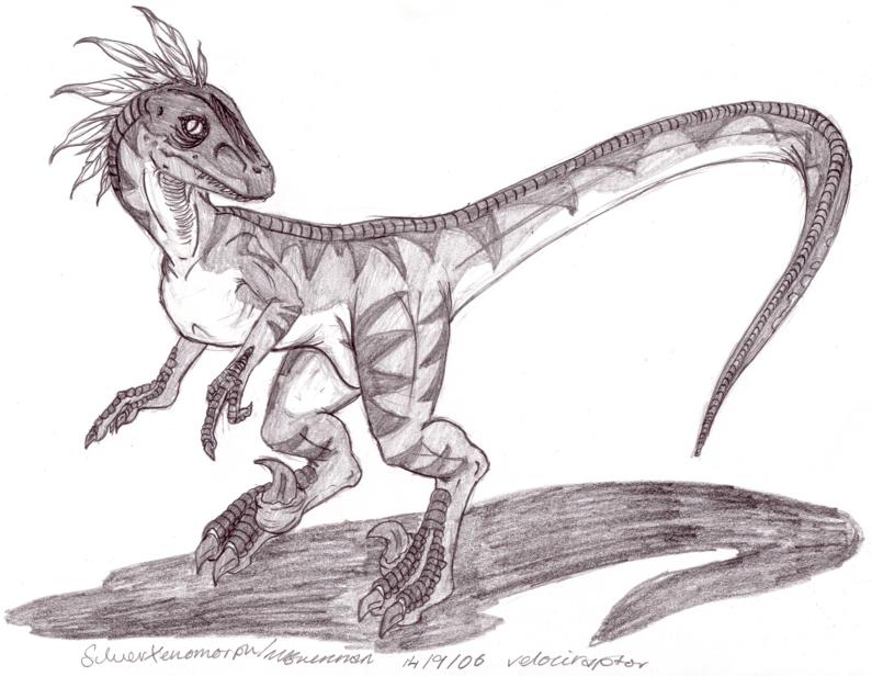 Drawn velociraptor SilverXenomorph BW Velociraptor BW by