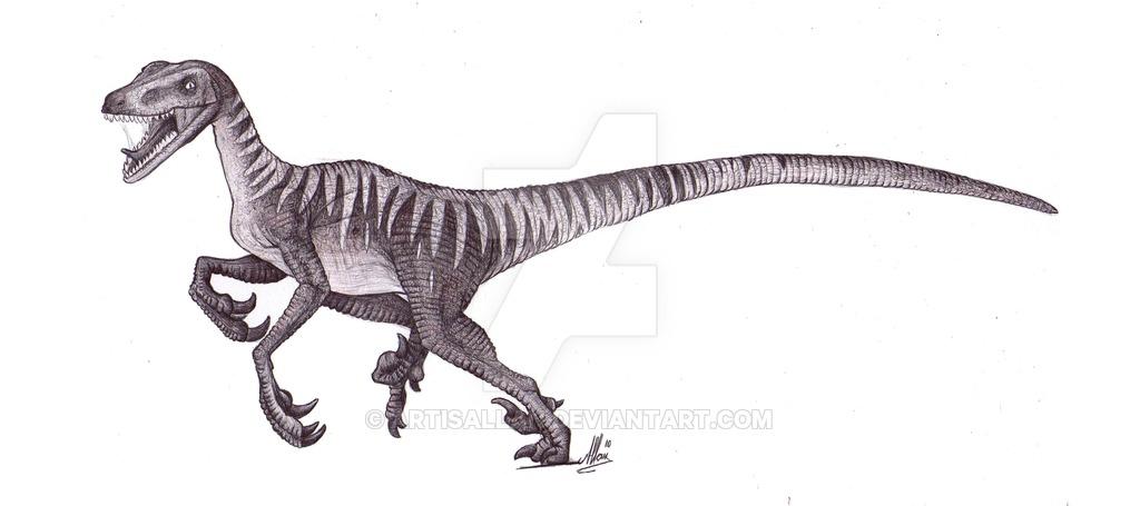 Drawn velociraptor Inspiration for ArtisAllan Velociraptor DeviantArt