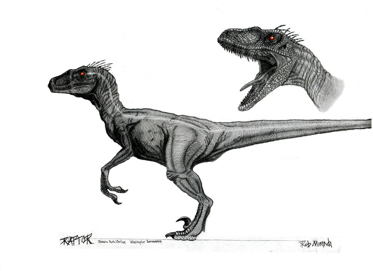 Drawn velociraptor Com Velociraptor by yankeetrex about