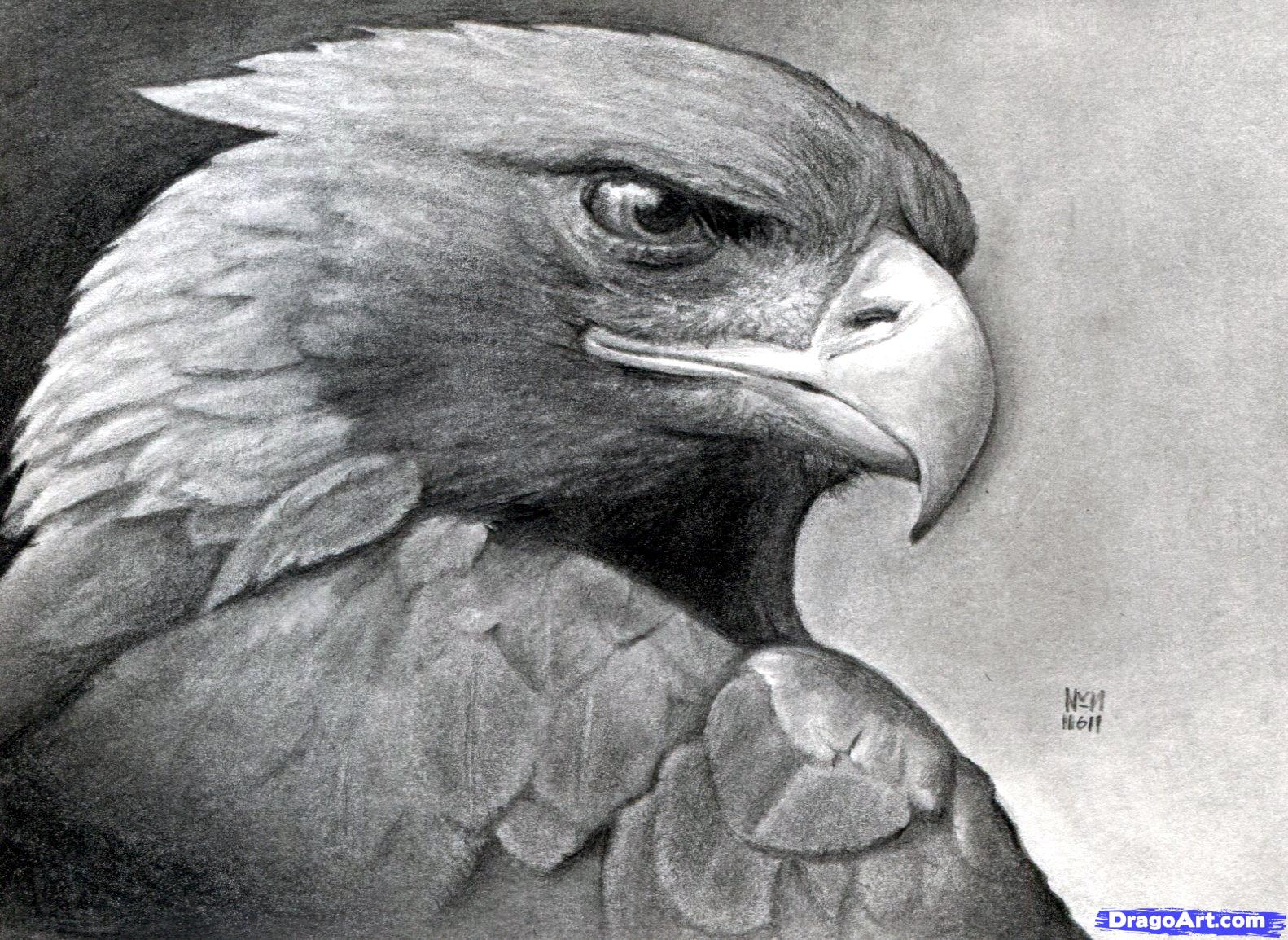 Drawn reptile eagle head front Draw Realistic a to to