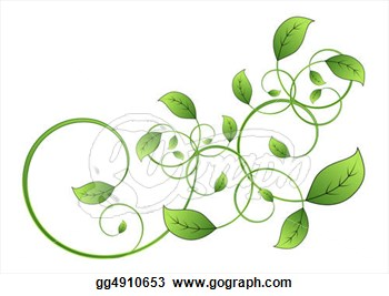 Drawn leaves vine Clipart isolated on flora drawing