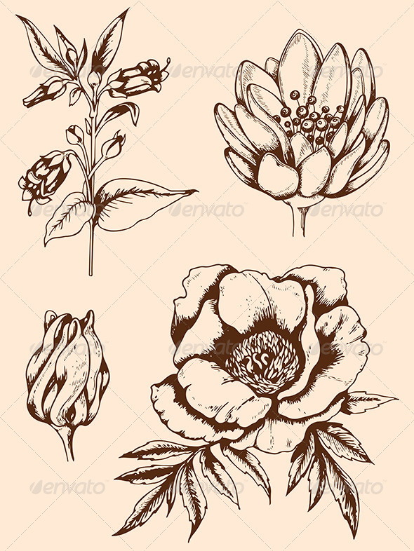 Drawn vintage flower & Vintage Hand GraphicRiver Flowers