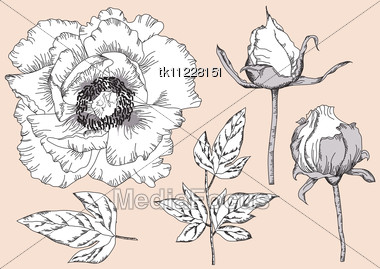 Drawn vintage flower Flowers Isolated Free Vintage Image