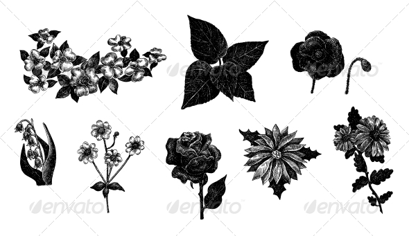 Drawn vintage flower Ink Flowers Set of by