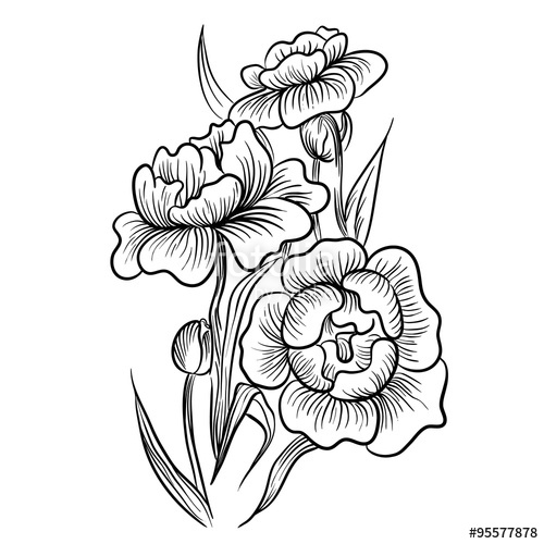 Drawn rose bush old fashioned flower Plants by flowers Vintage Roses