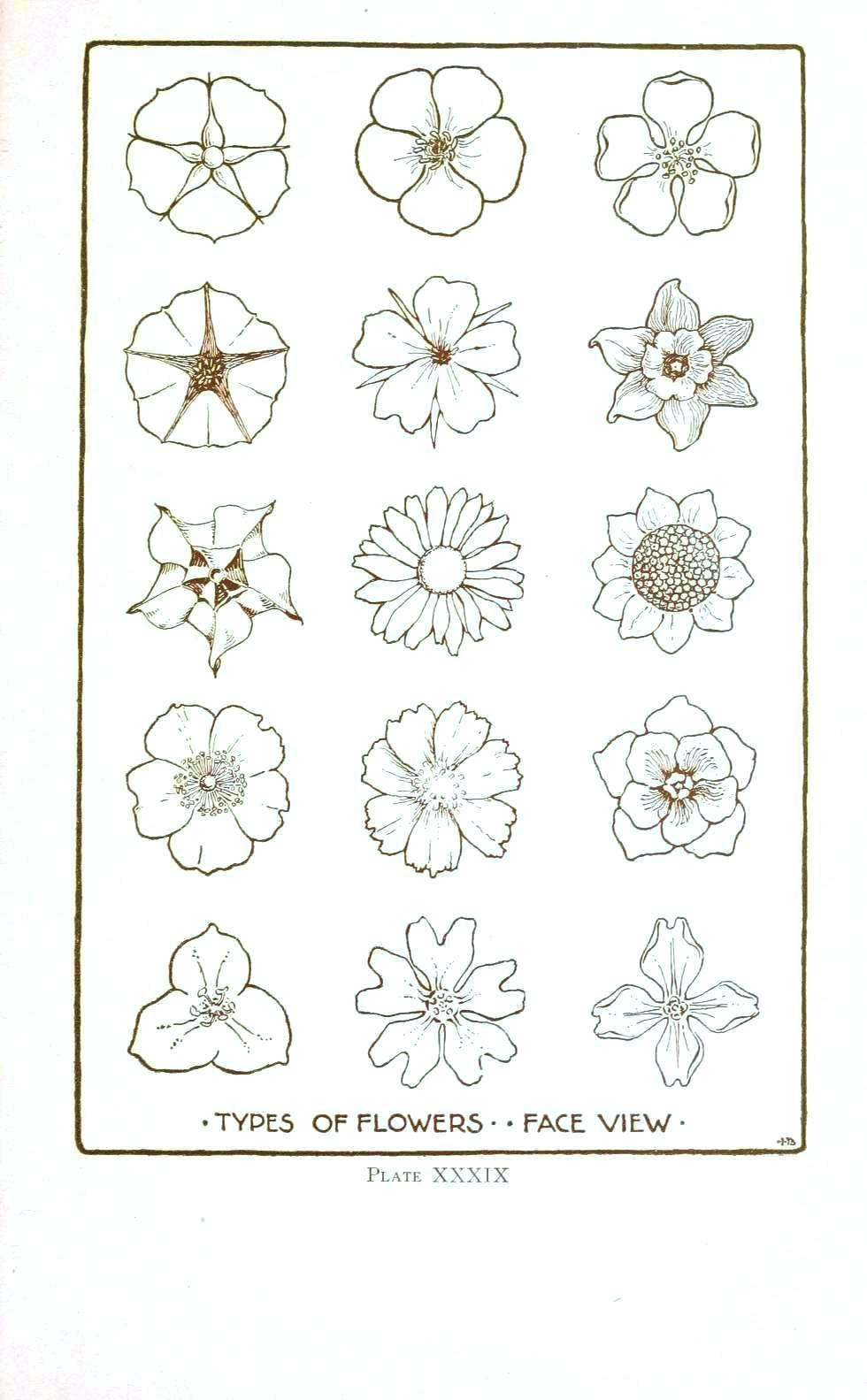 Drawn vintage flower line drawn Drawings Line – Vintage line
