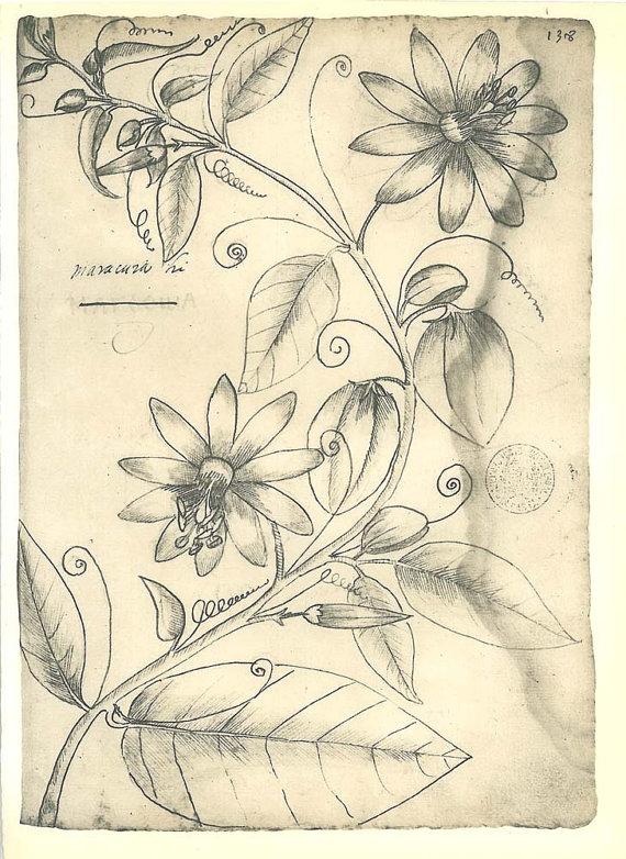 Passion Flower clipart complicated Vintage Flower Botanical Vintage Frei