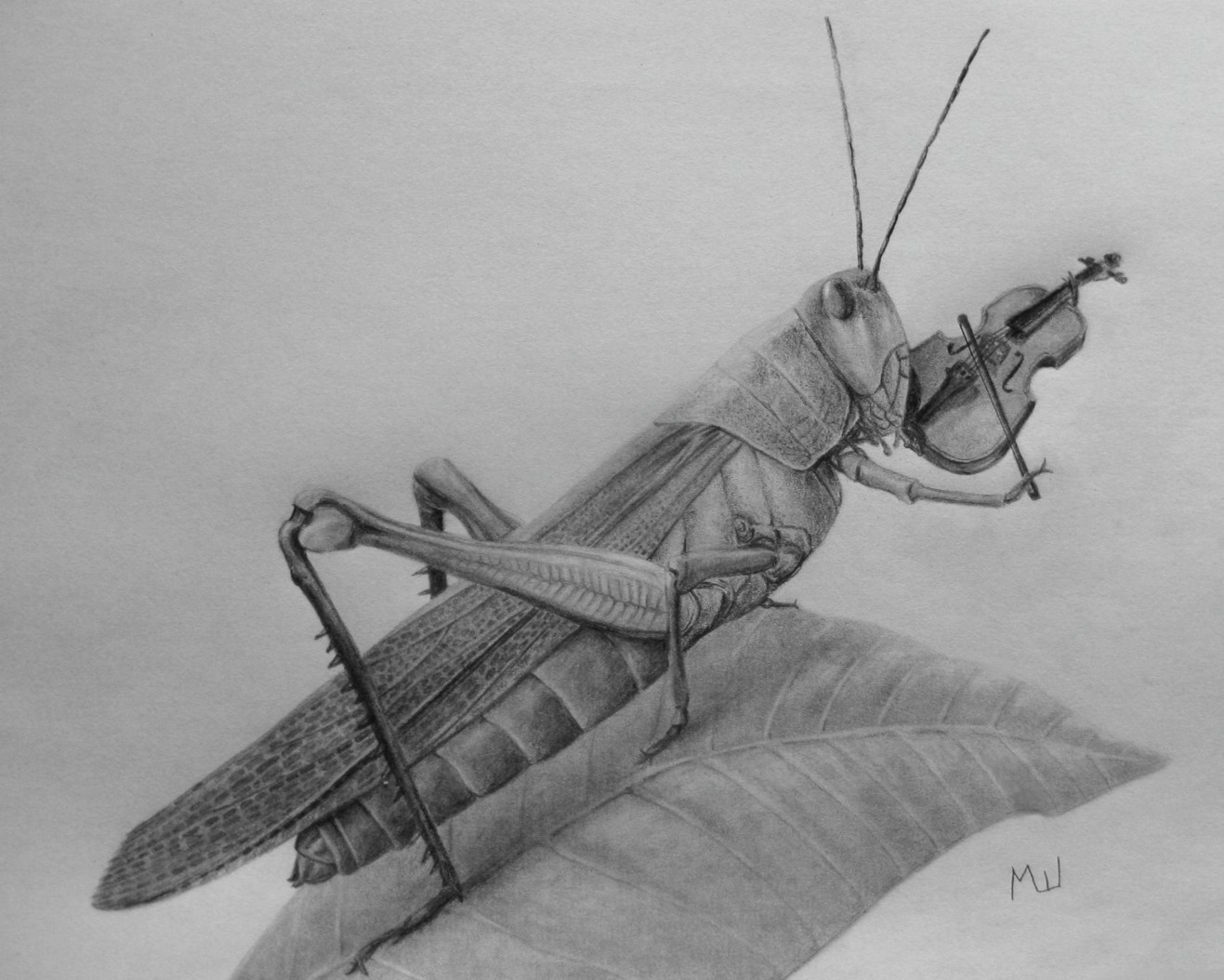 Drawn violin pencil sketch Violin Playing of 00049 Grasshopper