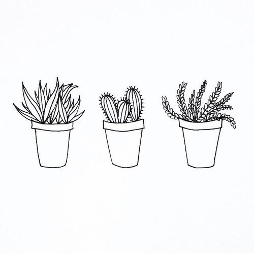 Drawn cactus black and white Ilustrações d4766e26036449 5634e9b2c85ec plants (600×750)