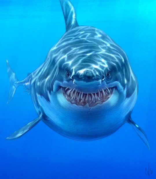 Drawn shark great white shark Of of m great i