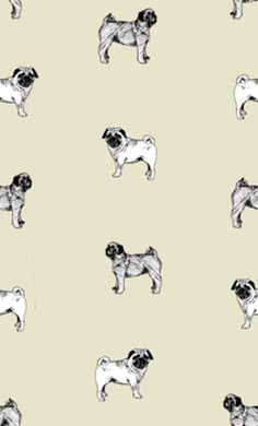 Drawn pug tumblr backgrounds Best Pinterest wallpaper?! this? I