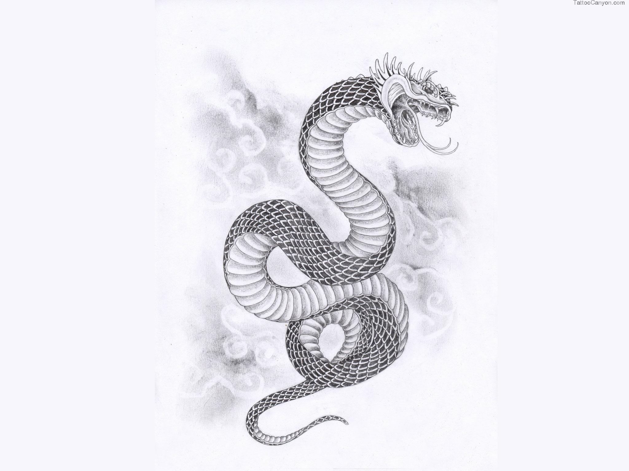 Drawn snake snake attack Snake Wallpaper Art Tattoo Concept