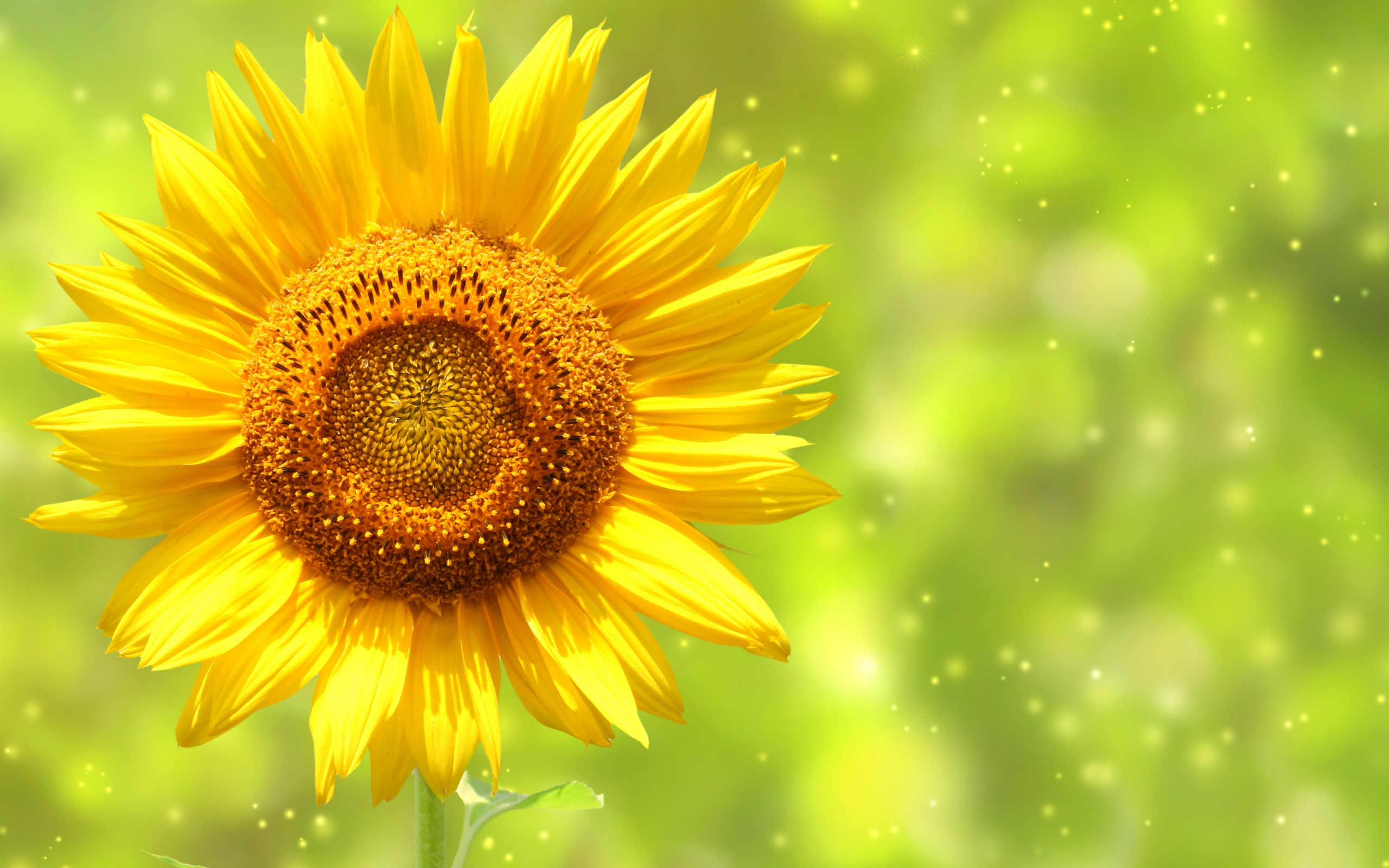 Sunflower clipart wallpaper Drawing Sunflower Pretty wallpaper Wallpaper