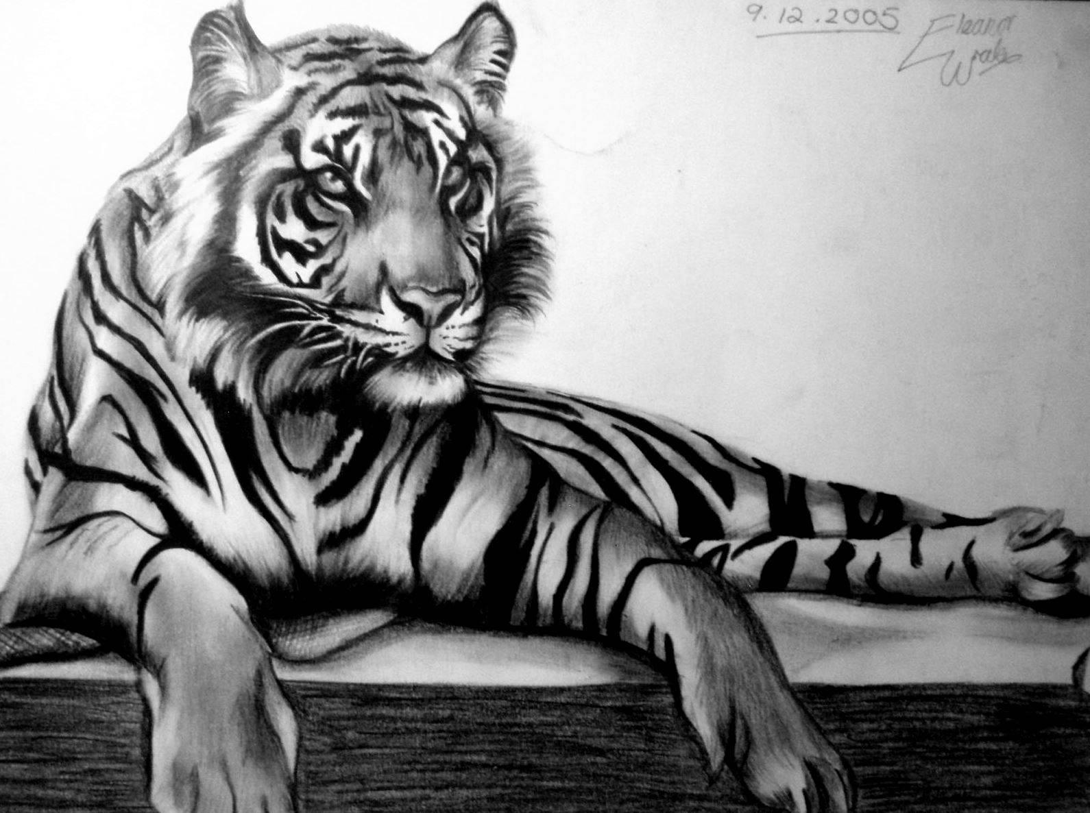 Drawn wallpaper tiger Photo#23 Drawings Cool drawings Tigers