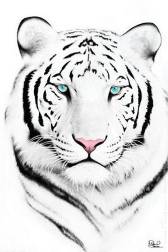 Drawn wallpaper tiger Wallpaper Face White Face