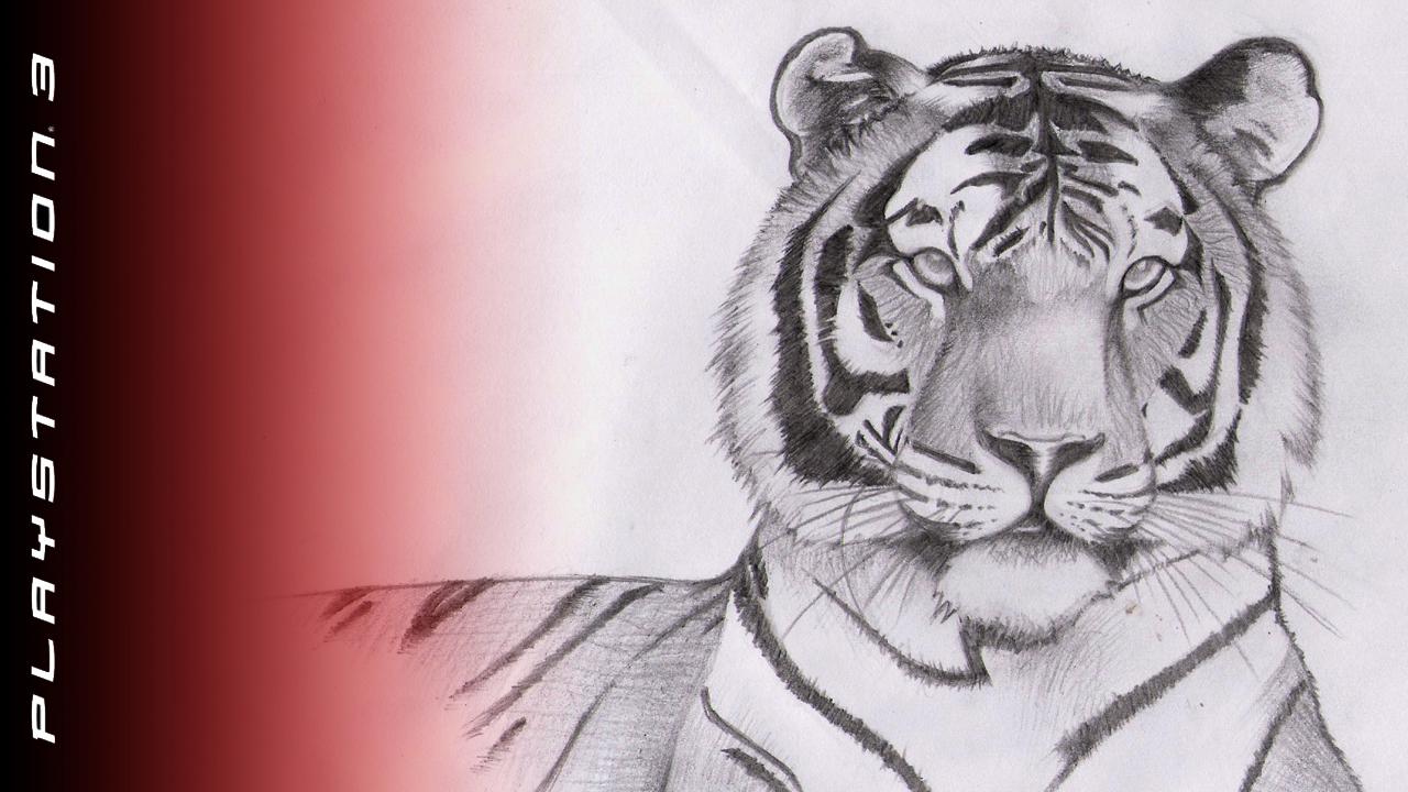 Drawn wallpaper tiger Drawn Tiger Wallpapers WallpaperSafari Wallpapers