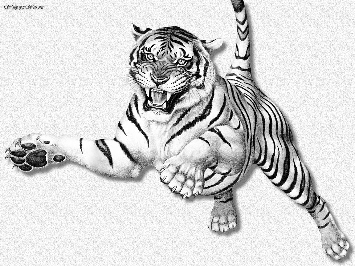 Drawn wallpaper tiger (Drawing & Painting) Leaping (Drawing