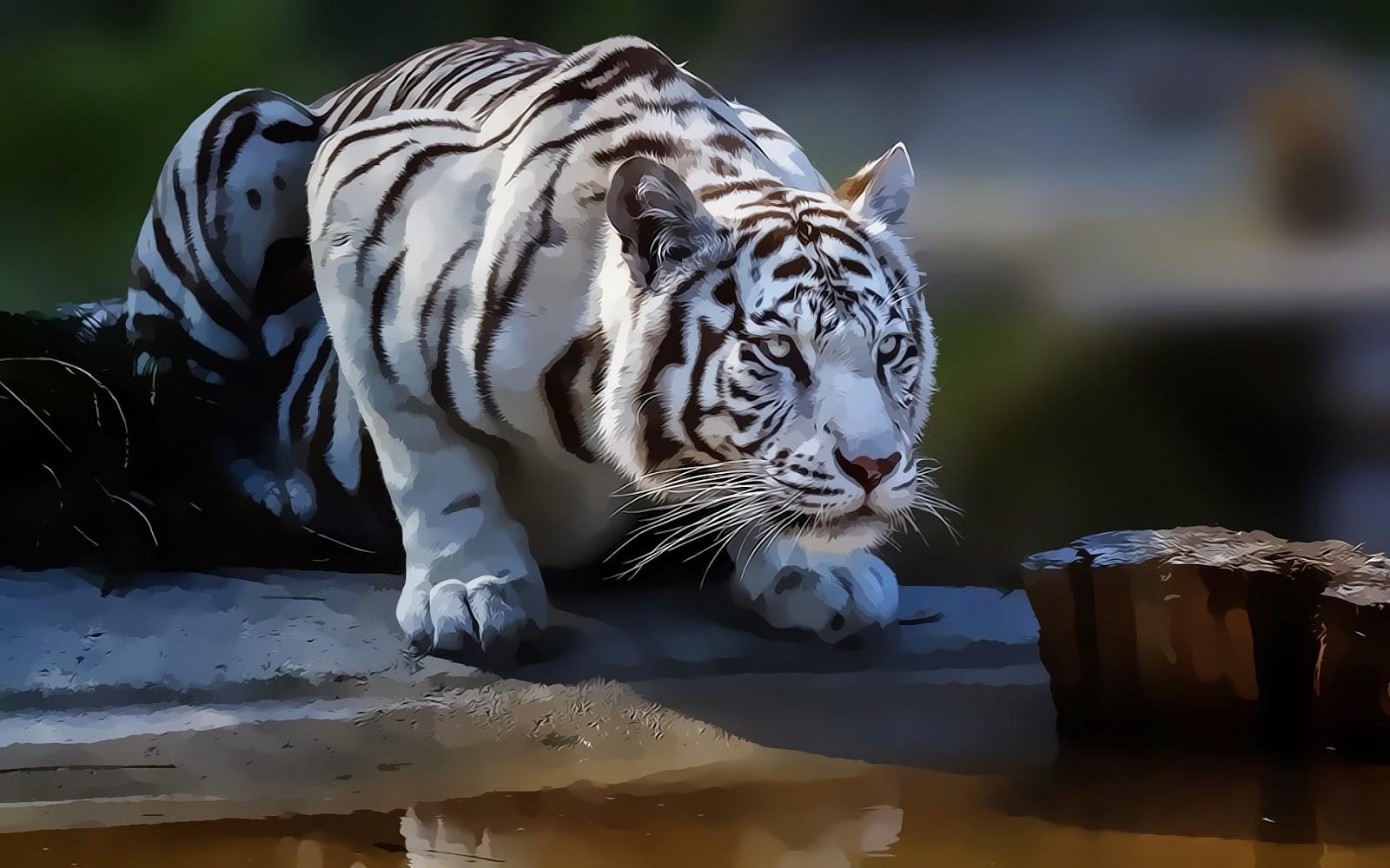 Drawn wallpaper tiger  Tigers Animals Drawing Wallpaper