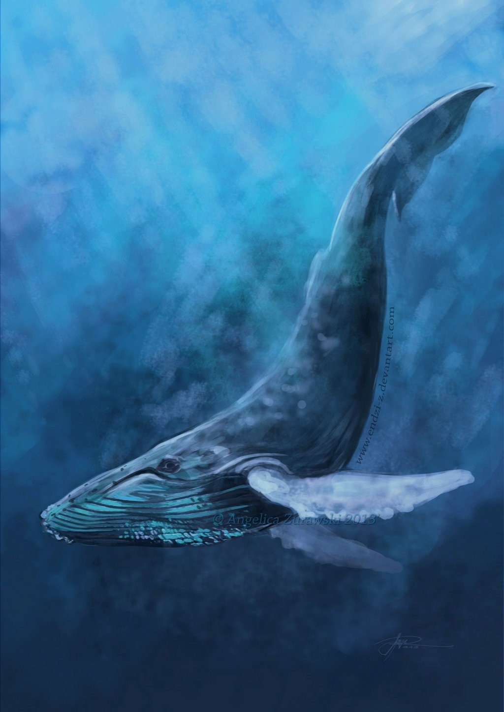 Drawn wallpaper whale (59+) Download Wallpapers Whale HD