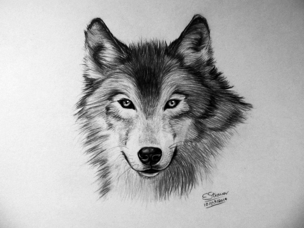 Drawn wallpaper wolf Tutorial for Here's I Wolf