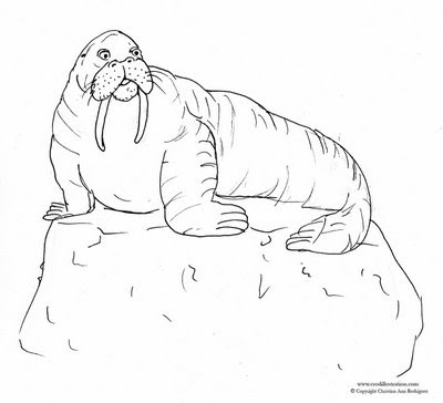 Drawn walrus #11