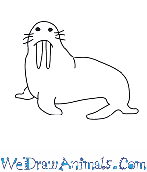 Drawn walrus #3