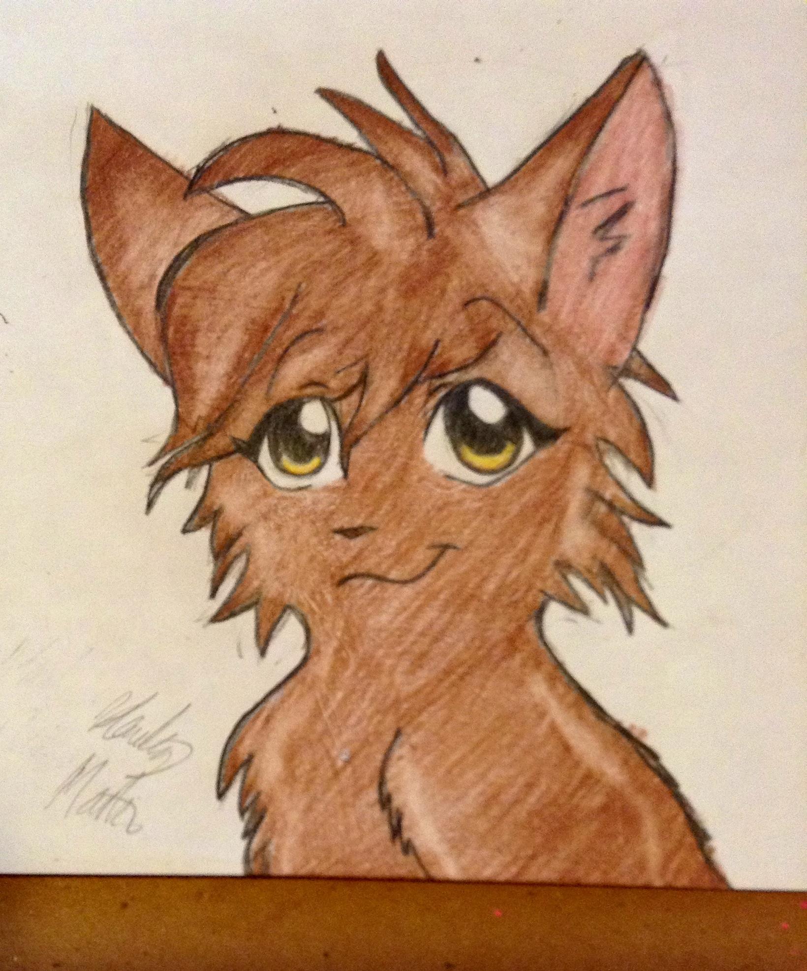 Drawn pug warrior Warrior this cat (drawn Cat