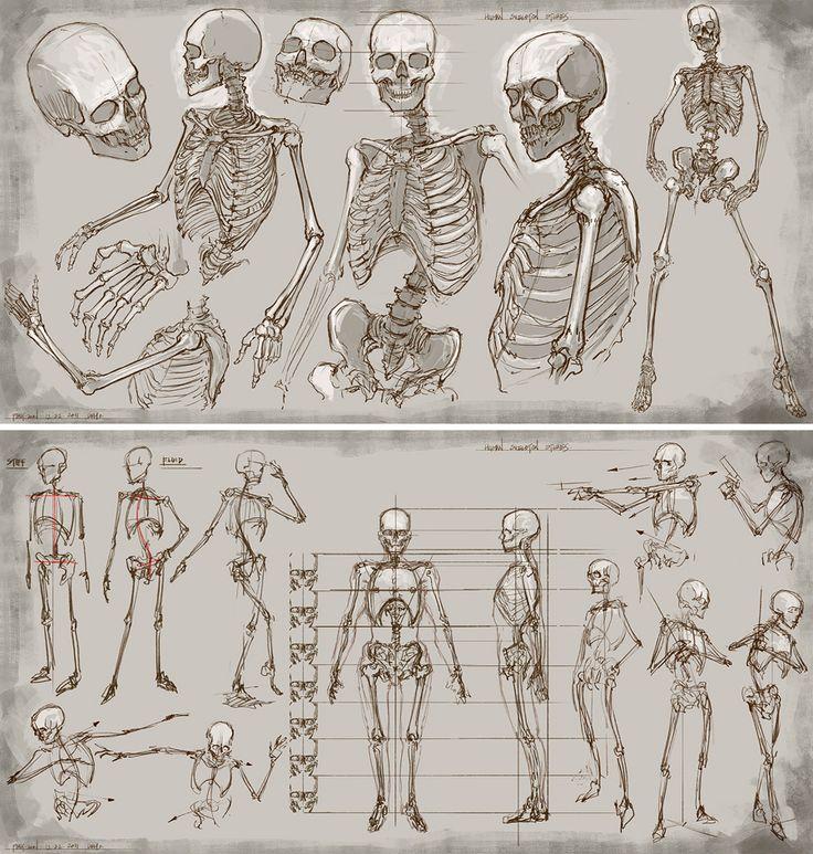 Drawn skeleton reference Bones Feng Pinterest REFERENCES Feng