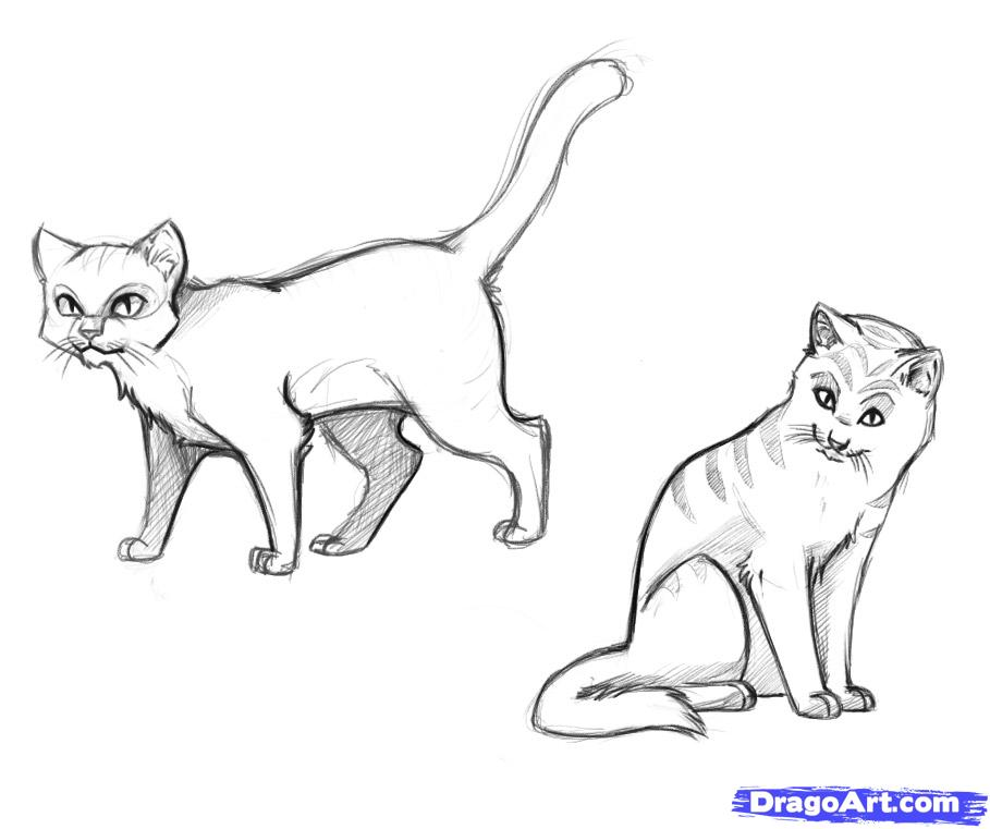 Drawn cover warrior cat Drawings to you warrior a