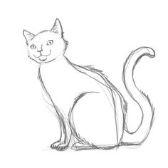 Drawn warrior simple Cat cat Do A draw