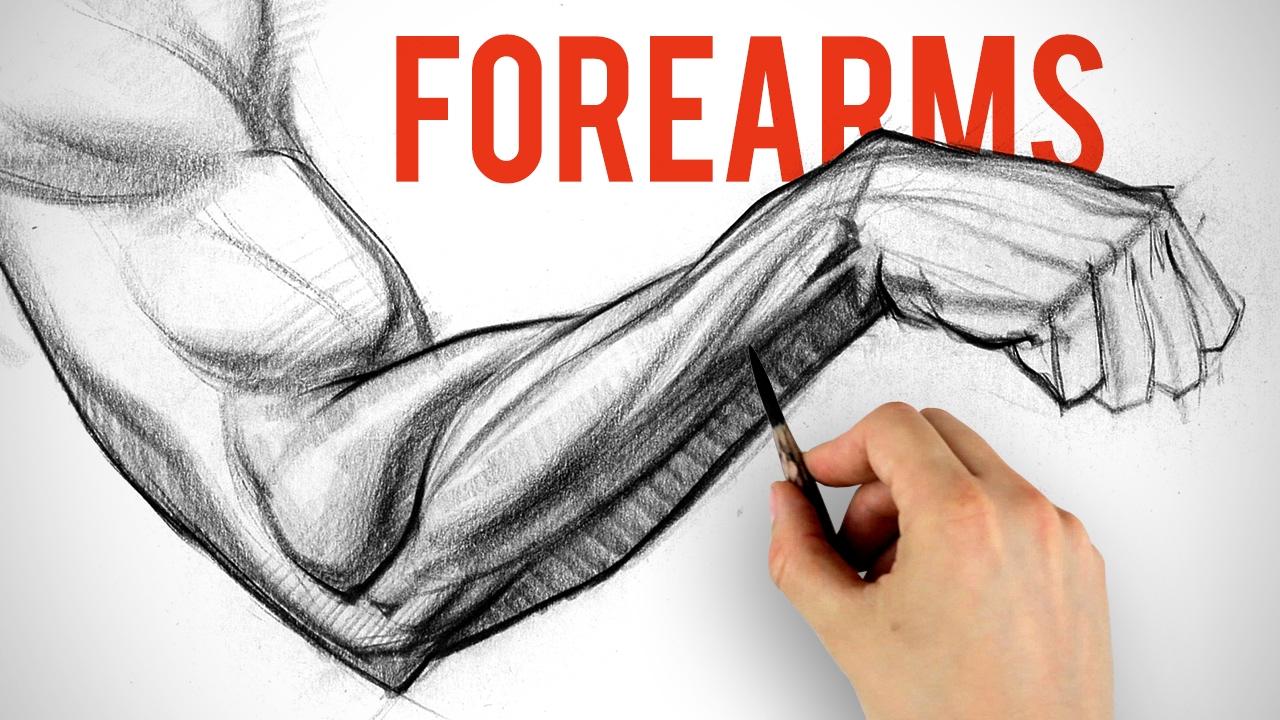 Drawn watch arm Shading Demo Arm Anatomy Forearms
