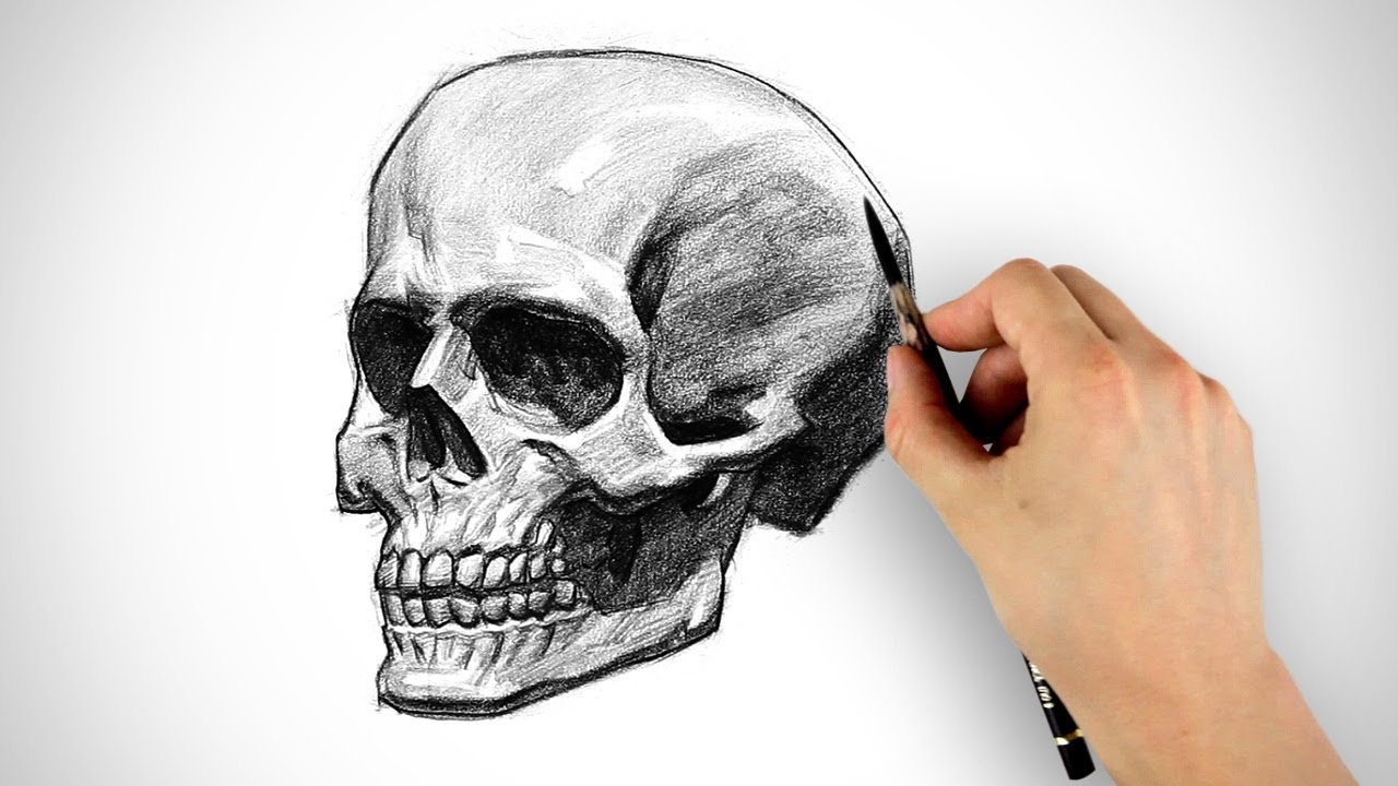 Drawn ssckull skeleton Special  Skull Draw a