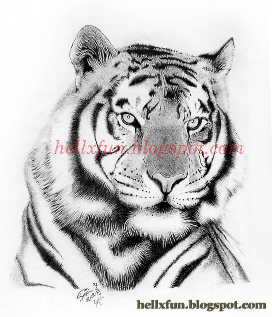 Drawn watch traditional Side Drawn  More Tiger