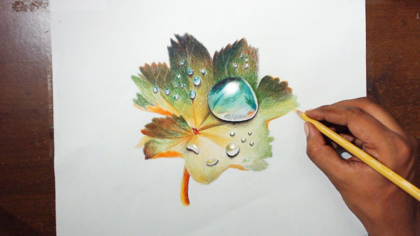 Drawn waterdrop leaf drawing A on Prismacolor pencils YouTube
