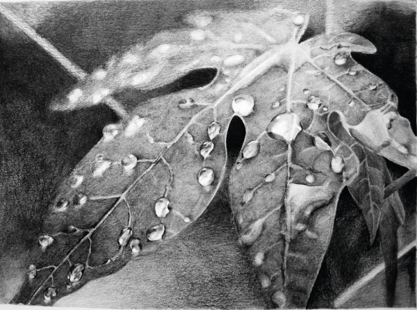 Drawn water droplets leave Malory drawing droplets droplets water