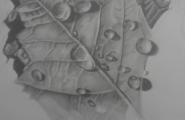 Drawn water droplets leave 2017 2013 Leaf Leaf ©