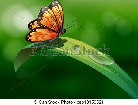 Drawn water droplets leave Above with Illustration leaf butterfly